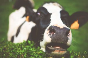 Carni bovine Macelleria Resca